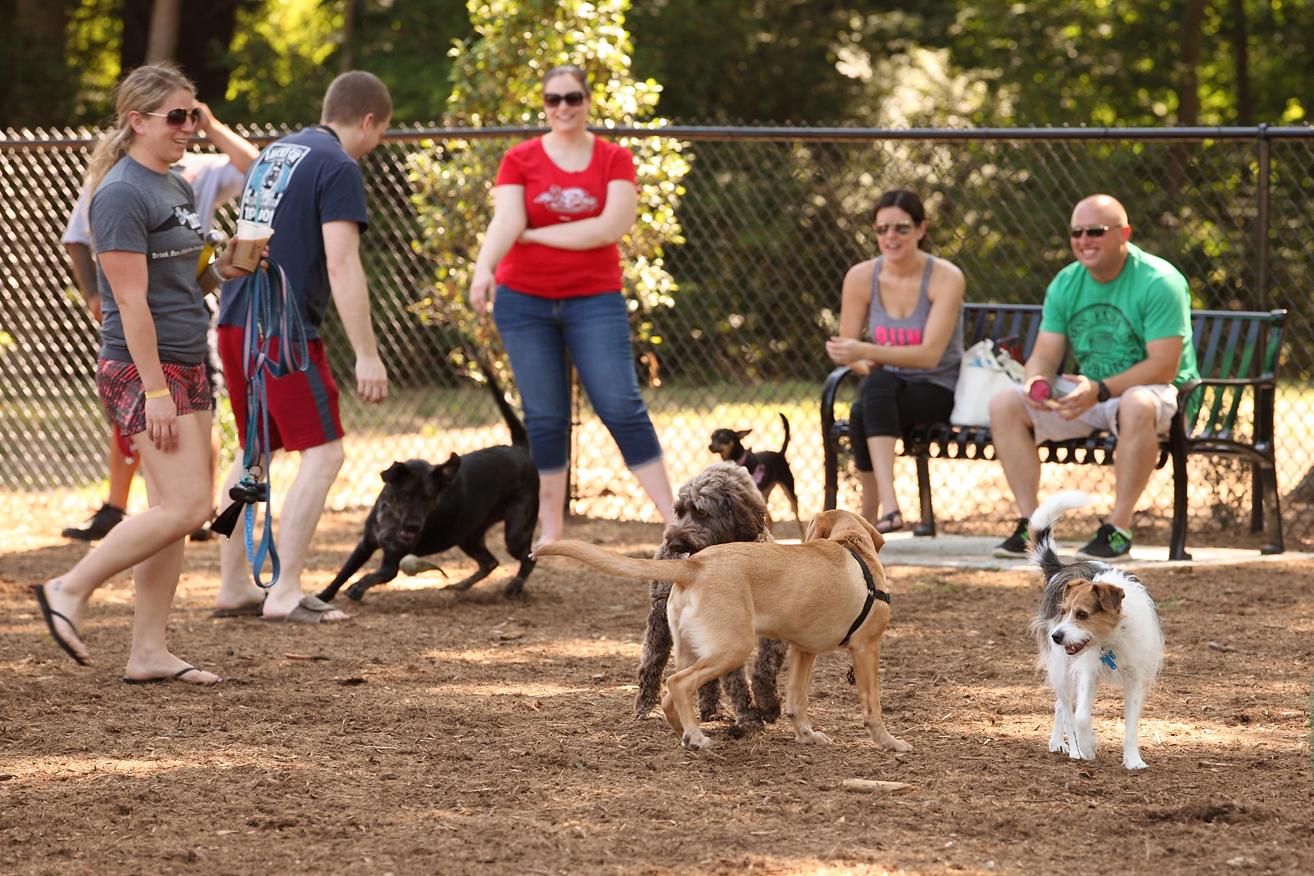 homepage_dog park